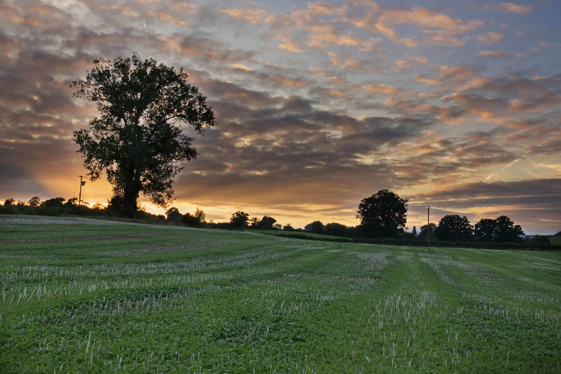Field ay sunset